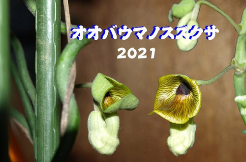 17_20210407162001